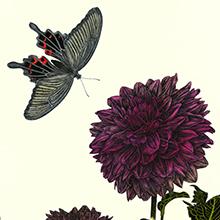 ダリアと蝶