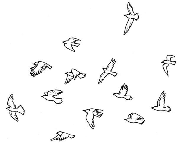 カット 鳥の群れ